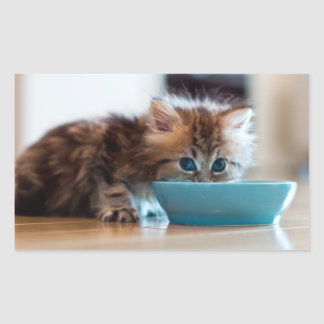 Young Persian kitten with blue eyes Rectangular Sticker