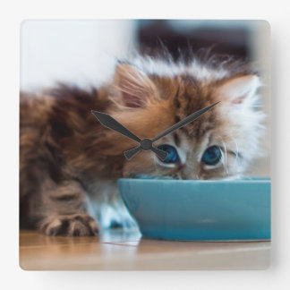 Young Persian kitten with blue eyes Wall Clock