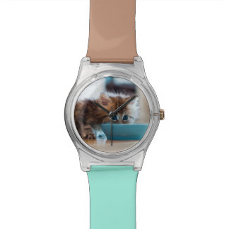 Young Persian kitten with blue eyes Watch