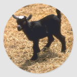 Young Pigmy Goat Classic Round Sticker