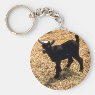 Young Pigmy Goat Key Chain
