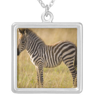 Young Plains Zebra Equus quagga) in grass, Silver Plated Necklace