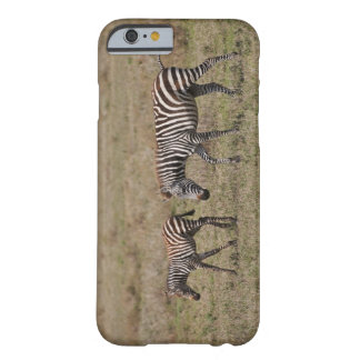 young Plains Zebra with mother, Equus quagga, Barely There iPhone 6 Case