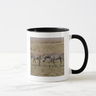 young Plains Zebra with mother, Equus quagga, Mug