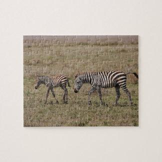 young Plains Zebra with mother, Equus quagga, Puzzles