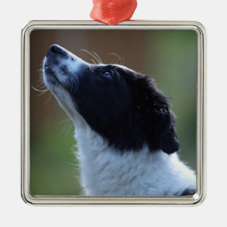 young pup Border Collie Christmas Ornament
