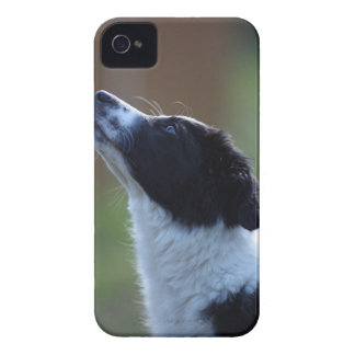 young pup Border Collie iPhone 4 Cover