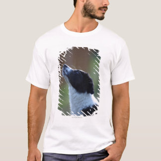 young pup Border Collie T-Shirt