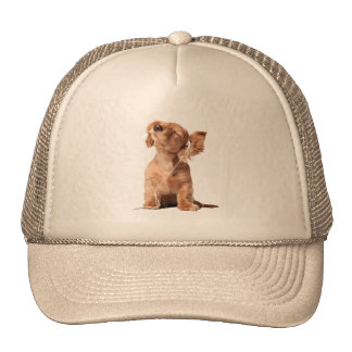 Young Puppy Listening to Music on Headphones Cap
