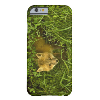 Young Red Fox coming out from hiding in bushes Barely There iPhone 6 Case