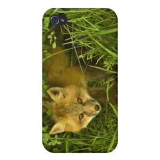 Young Red Fox coming out from hiding in bushes iPhone 4/4S Case