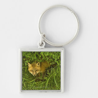 Young Red Fox coming out from hiding in bushes Key Ring