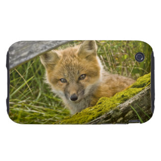 Young Red Fox looking through fence on San Juan Tough iPhone 3 Case