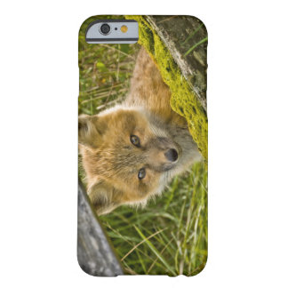 Young Red Fox looking through fence on San Juan Barely There iPhone 6 Case