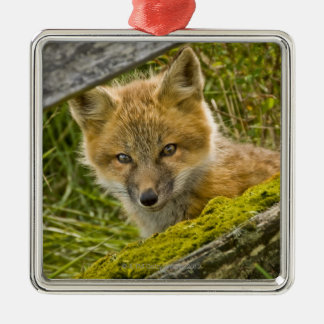 Young Red Fox looking through fence on San Juan Christmas Ornament
