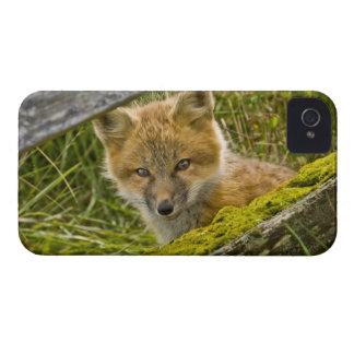 Young Red Fox looking through fence on San Juan iPhone 4 Case