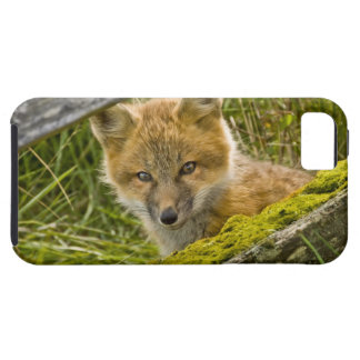 Young Red Fox looking through fence on San Juan iPhone 5 Case