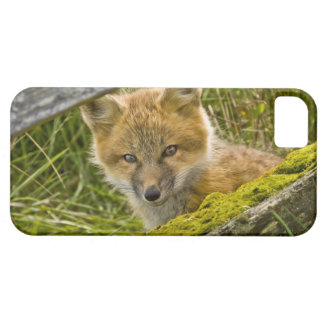 Young Red Fox looking through fence on San Juan iPhone 5 Covers