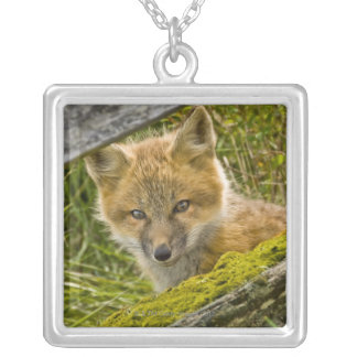 Young Red Fox looking through fence on San Juan Silver Plated Necklace