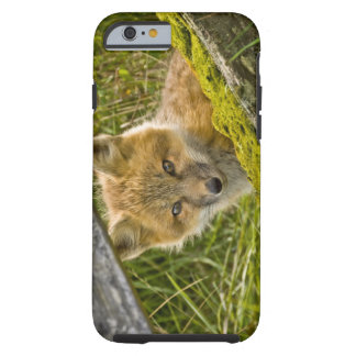 Young Red Fox looking through fence on San Juan Tough iPhone 6 Case