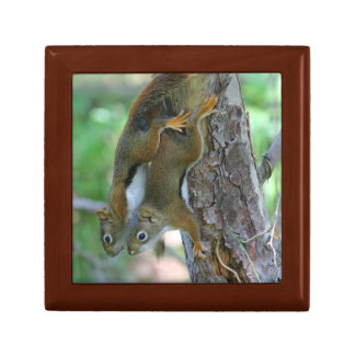 Young Red Squrrels Gift Box