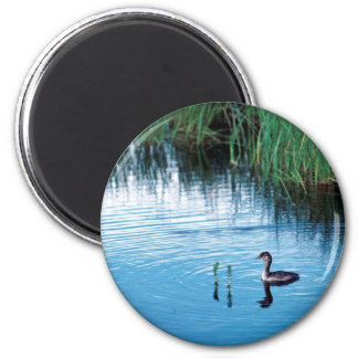 Young Rednecked Grebe Refrigerator Magnet