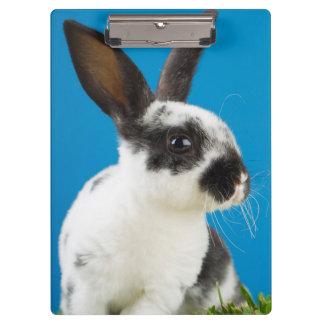 Young Rex rabbit Clipboard