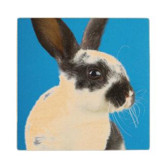 Young Rex rabbit Wood Coaster