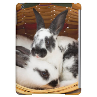 Young Rex rabbits in Easter basket 2