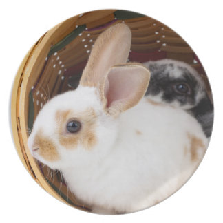 Young Rex rabbits in Easter basket Plate