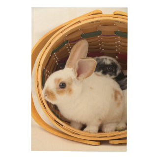 Young Rex rabbits in Easter basket Wood Wall Decor