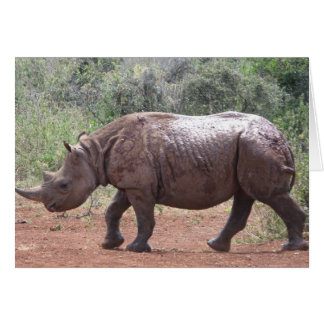 Young Rhino Card