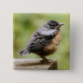 Young Robin Learning To Fly... Taking A Break On 15 Cm Square Badge