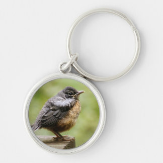 Young Robin Learning To Fly... Taking A Break On Key Ring