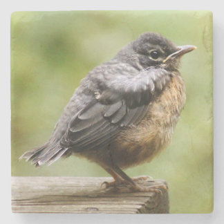 Young Robin Learning To Fly... Taking A Break On Stone Coaster