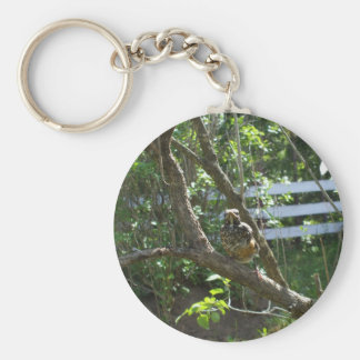 Young  Robin  on Lilac branch Key Ring