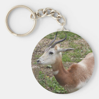 Young Scimitar-Horned Oryx Basic Round Button Key Ring