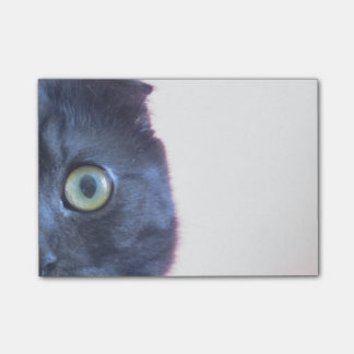 Young Scottish Fold Munchkin Face Post-it® Notes