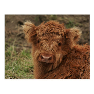 Young Scottish Highlander Postcard