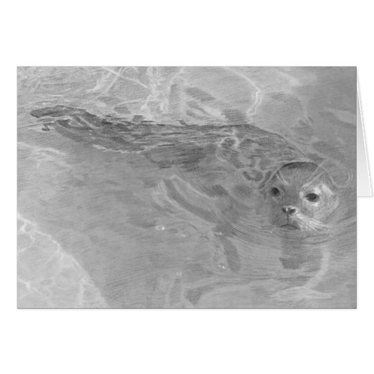 Young Seal Pup Card