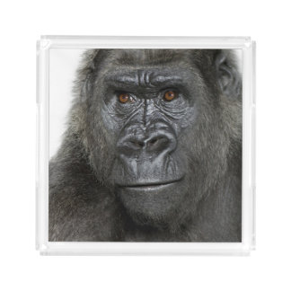 Young Silverback Gorilla Acrylic Tray