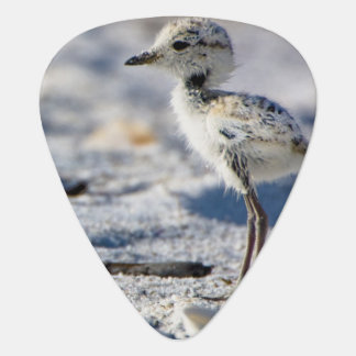 Young Snowy Plovers (Charadrius alexandrinus) Guitar Pick