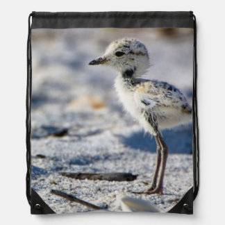 Young Snowy Plovers (Charadrius alexandrinus) Backpacks