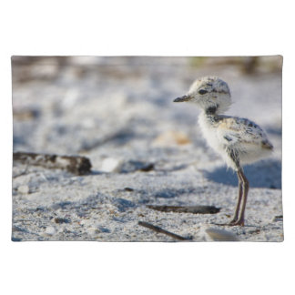 Young Snowy Plovers (Charadrius alexandrinus) Placemat