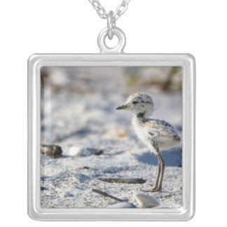Young Snowy Plovers (Charadrius alexandrinus) Silver Plated Necklace