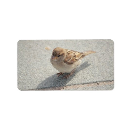 young sparrow address label