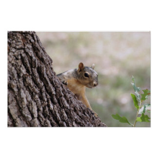 Young Squirrel Posters