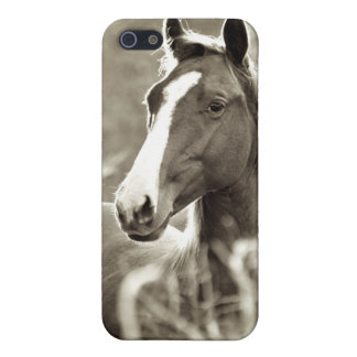 Young Stallion iPhone 5/5S Cover