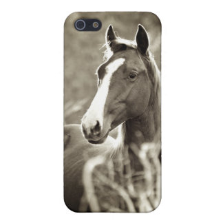 Young Stallion iPhone 5 Cases