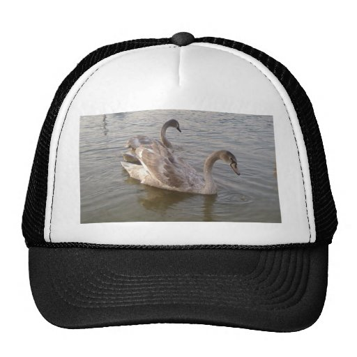 Young Swans Lake Hat